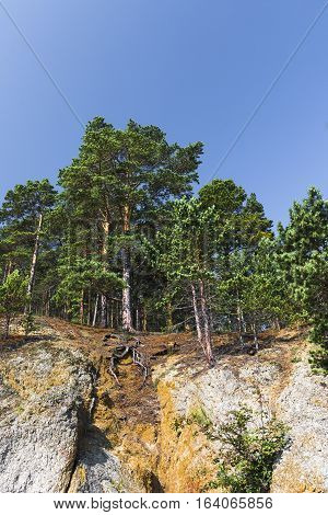 Mighty pine trees with powerful roots stand on the edge of the cliff above the coast of lake Baikal.