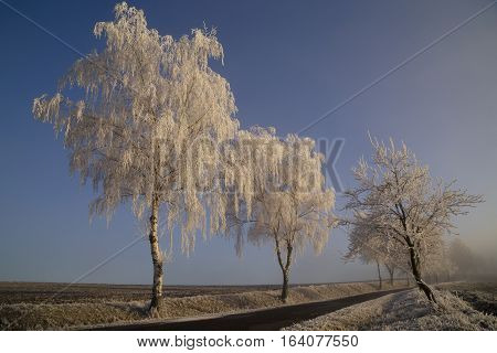 Frozen trees with rime road field snow winter