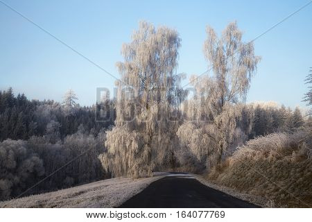 Frozen trees with rime field road snow winter
