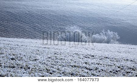 Frozen field with rime snow january winter