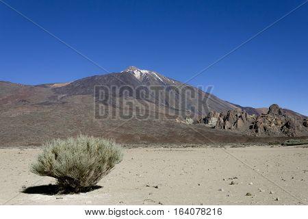 parque nacional del teide ,esplanada con una retama y al fondo el volcano Teide