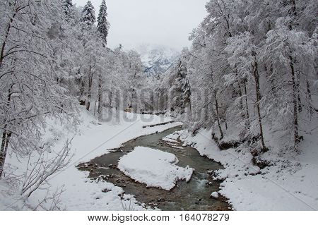 The view of cold river between the trees near Partnach Gorge in winter time. Garmisch-Partenkirchen. Germany.