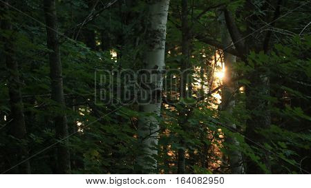 The sun creeps between the trees at sunset.