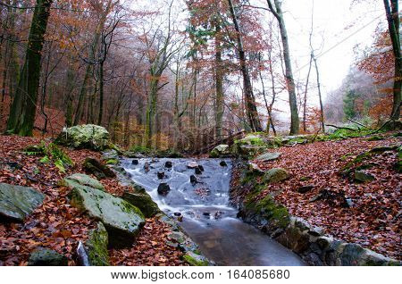 Forest brook through late autumn landscape in Germany