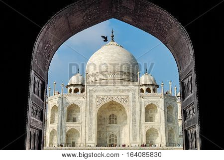 Taj Mahal and flying pigeon in the arch. Agra, India.