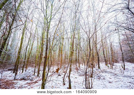 Dull And Depressive Winter Forest Landscape