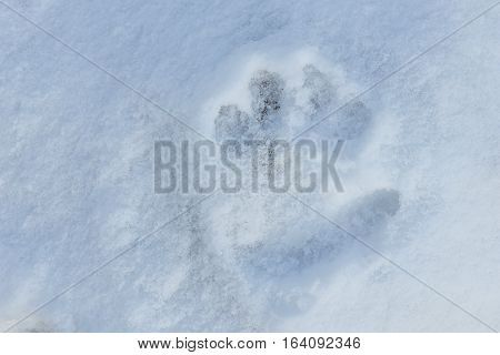 Child hand print in the snow hand print in the snow
