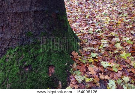 Fallen leaves with tree trunk during autumn
