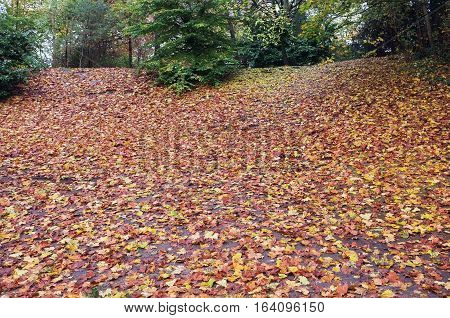 Fallen leaves in the wood during autumn