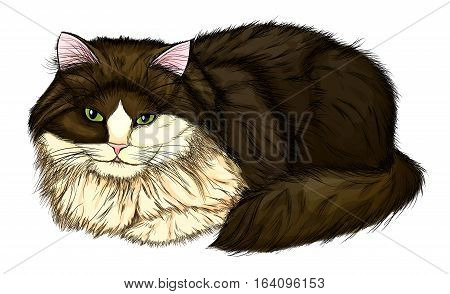 beautiful large and fluffy cat. Painted in a realistic style that imitates watercolor