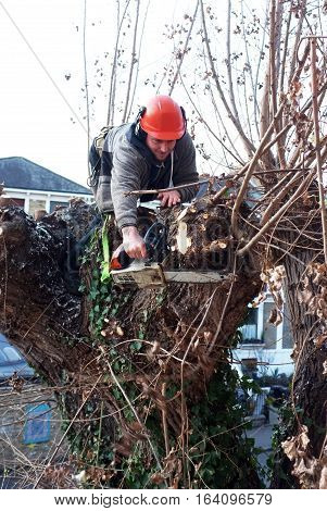 London, UK - December 20, 2016: Worker cuts tree branches with chainsaw on top of a tree in London.