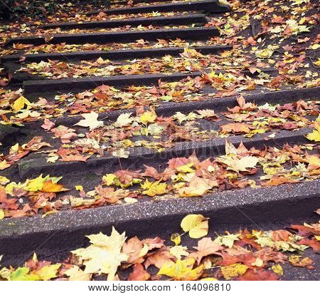 Fallen leaves on steps of a Ghent's park