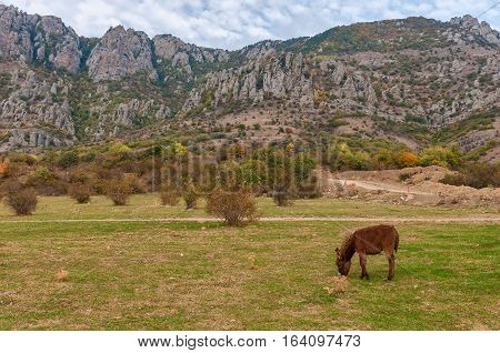 Donkey grazing on the grass in autumn slope by Demerji mountain, Crimea