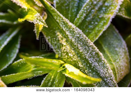 Ice Structure On Plants