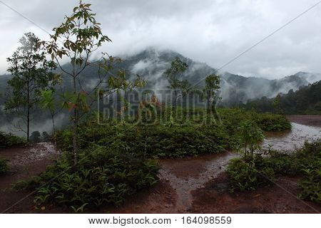 The Sea of Mist at Krungshing Nakhon Si Thammarat.