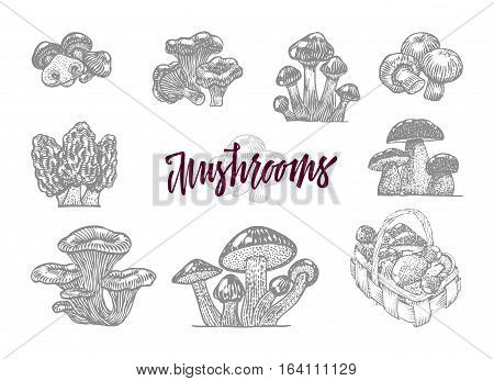 Gray mushroom in engraved icon set with big vinous headline and isolated forest mushrooms vector illustration