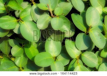 green leaf background or green Leaves, abstract texture and background