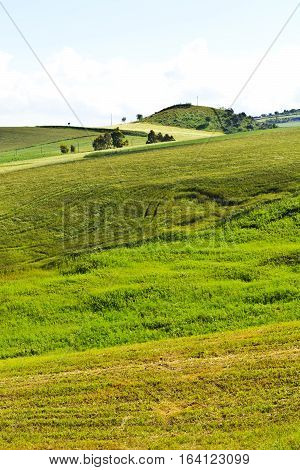 Wheat Fields on the Hills in Sicily