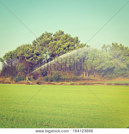 Sprinkler Irrigation on a Field in Portugal Instagram Effect