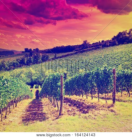 Hill of Tuscany with Vineyard at Sunset Instagram Effect