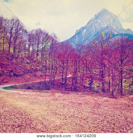 Dirt Forest Road on the Slopes of the Italian Alps in Piedmont Instagram Effect