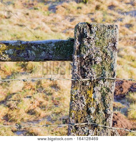 Old Barbed Wire On Weathered Fence Post With Lichen