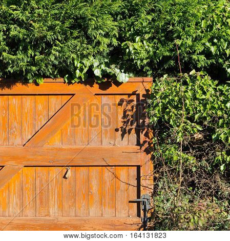 Orange painted wooden fence door with rural evergreen plants hedge in winter sun