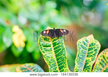 Closup image of a beautiful butterfly landing on a tree branch. With colorful flowers.