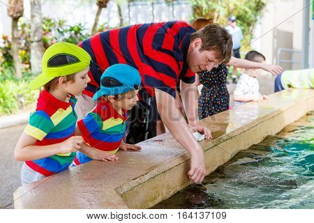 Young father and two little kid boys feeding rays in a recreation area. Man and his sons, preschool twins children having fun with observing fishes.