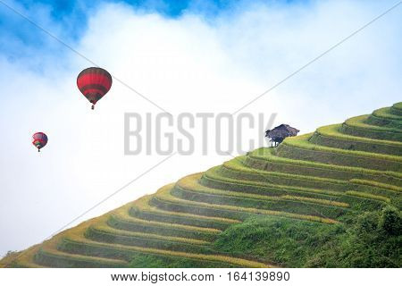 Balloon float in the rice fields on terraced of Mu Cang Chai YenBai Vietnam. Rice fields prepare the harvest at Northwest Vietnam.Vietnam landscapes.