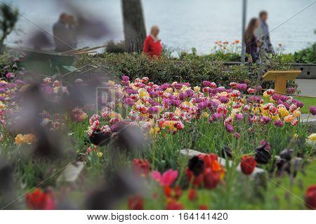 Beautiful flowers grow near the big lake