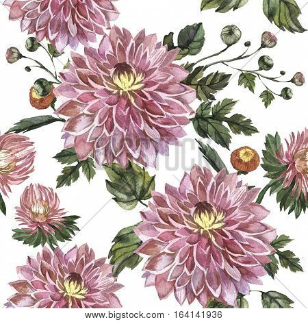 Wildflower aster flower pattern in a watercolor style isolated. Full name of the plant: Aster Duchess Mixed. Aquarelle wild flower for background, texture, wrapper pattern, frame or border.