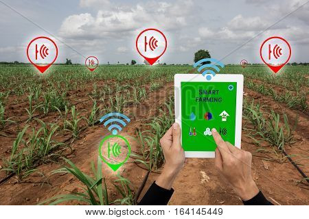 Internet of things(agriculture concept),smart farming, smart agriculture.The farmer using application in taplet to control and monitor the condition by wireless sensor system in the agriculture field
