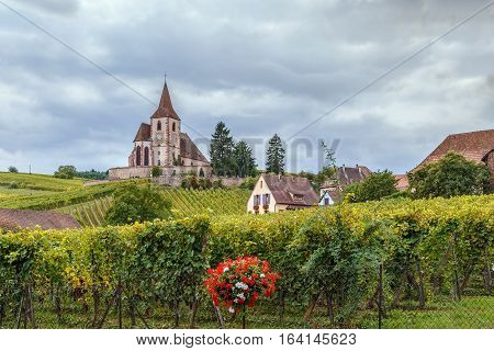 View of fortified Church in Hunawihr with surrounding vineyards Alsace France