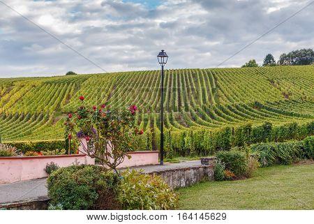 Vineyard in Alsace near Hunawihr Alsace France. Autumn