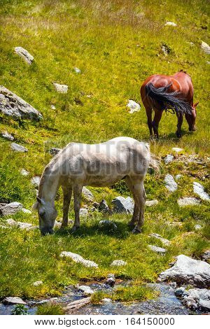 Horse Herd On The Pasture In The Mountains