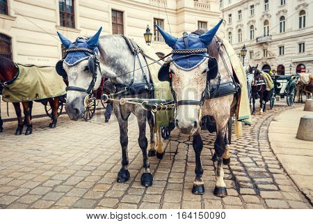 Horse-driven Carriage At Hofburg Palace In Vienna, Austria