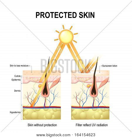 Protect human skin from UVA UVB rays. without protective cream rays penetrate deep into skin damaging elastin and collagen fibers skin loses moisture. The sunscreen lotion protected the skin from harmful radiation.