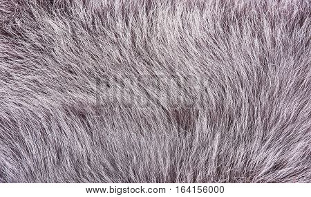 Pile sheepskin closeup. Detail of sheepskin coat on inside