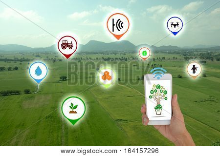 Internet of things(agriculture concept),smart farming, smart agriculture.The farmer using application in phone to control and monitor the condition by wireless sensor system in the agriculture field