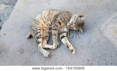 a cat sleeping on the rocks at the seaside
