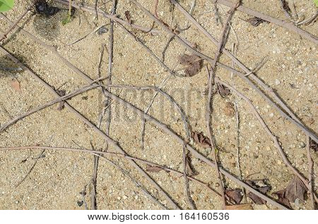 background of sand stones grass stems and roots