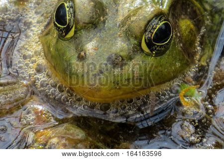 Close up of green and yellow frog
