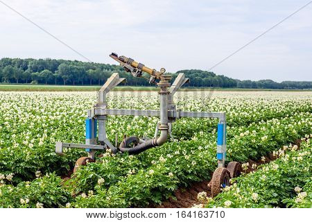 Rollaway automatic watering gun and a long water hose in a large field with white and yellow flowering potato plants on a warm day in the Dutch summer season.