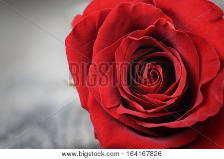 single dark red rose on wood background, macro photo