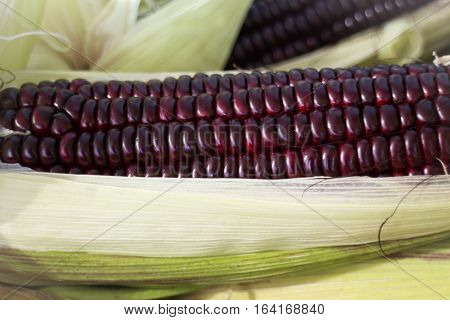 Fresh organic sweet purple corn stock photo