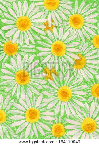 White camomiles - ox-eye daisy - on green background painting gouache
