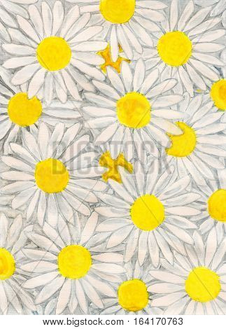 White camomiles - ox-eye daisy hand painted picture gouache.