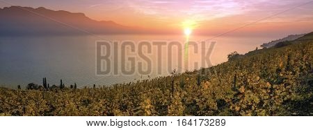Panorama on Lavaux region by sunset, Vaud, Switzerland