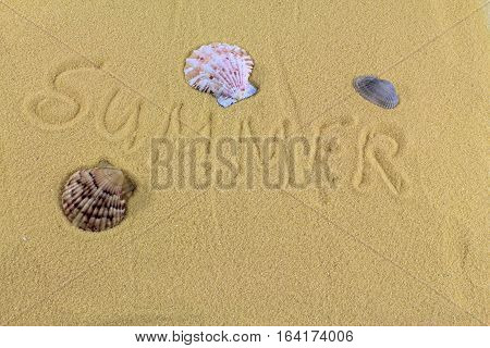 Word summer and seashells on the yellow sand,Summer background